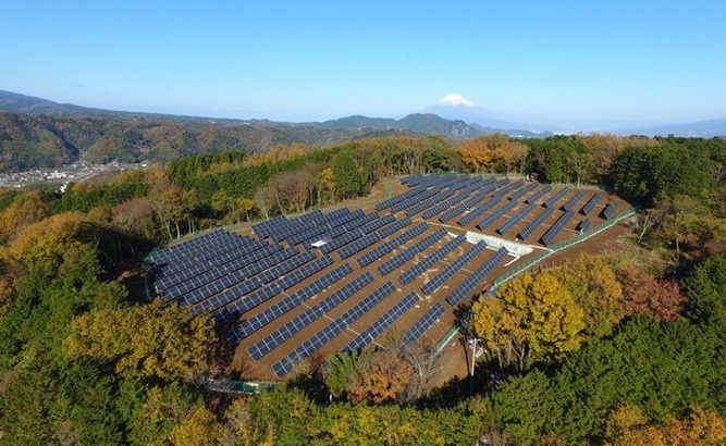 How land under solar panels can contribute to food security