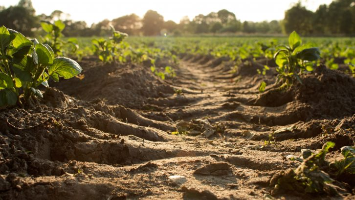 The huge potential of agriculture to slow climate change